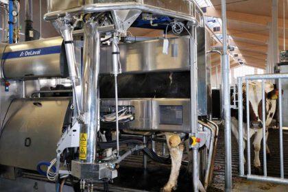 lehmän lypsyrobotti - uusi teknologia
