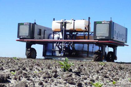 Ruiskurobotti pellolla